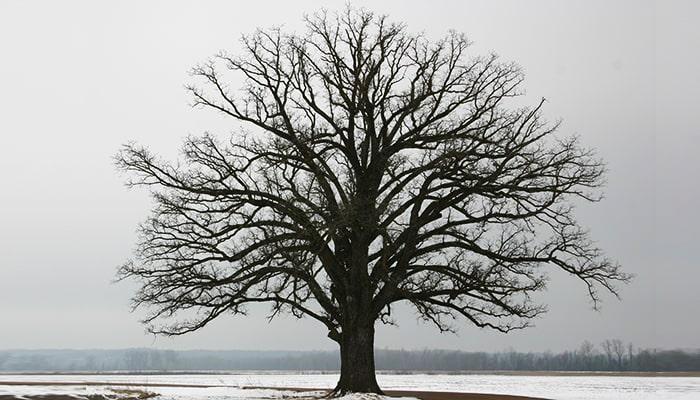آبیاری درخت ها در زمستان